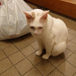 らんこは家事をテキパキとこなせる猫さんですよ~の巻