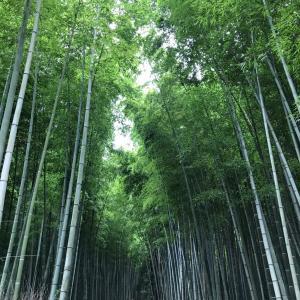 ☆先週の京都・嵐山〜嵯峨野の様子☆