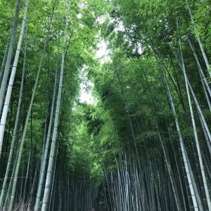 ☆先週の京都*『都路里』の抹茶パフェとコロナ対策に感動!!☆