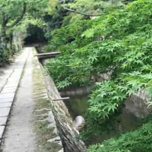 ☆お盆休み♪『朝一京都』ぶらり散策と9月のレッスンのこと☆