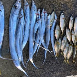 太刀魚のリベンジー