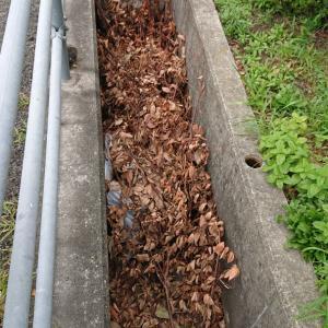 枝打ちしれ排水溝に放置
