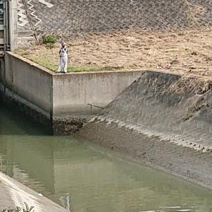 ゴミが水面を漂う場所で釣り人が