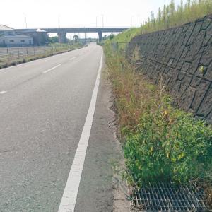 未だに進まぬ徳島市の排水路の清掃