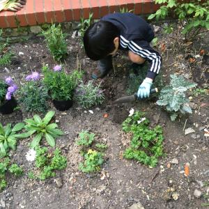 Populating our garden  ③