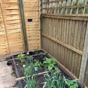 春の庭掃除