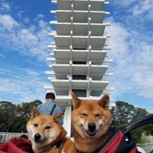 号外!『駒沢わんこ祭り』♪