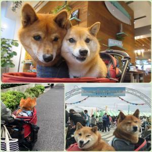『駒沢わんこ祭り』♪
