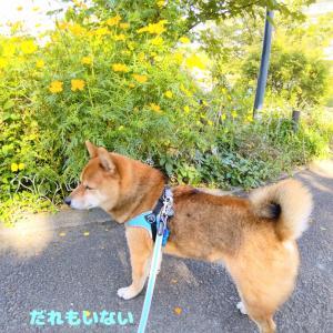 秋の花とかのんちゃん♪