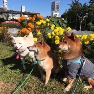 公園 のちカフェ!