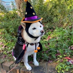 Happy Halloween ♪〈後編〉