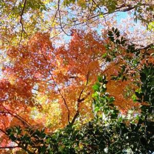 落ち葉の季節♪