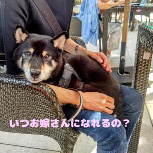 え、茶のみ友だち? by はりんこ劇場