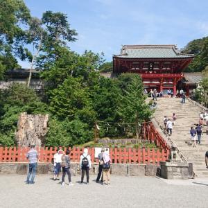 鶴岡八幡宮の大銀杏とミュージアムカフェ