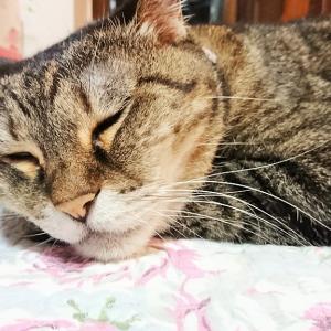 """伽羅の思い出~目ヂカラと圧~""""何うろたえてるの?(=^・^=)"""""""