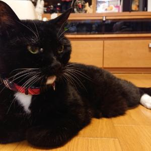猫背のススメ