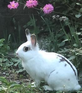 お庭のラムちゃん*