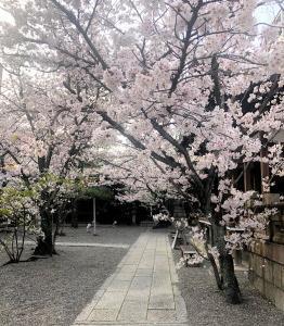 桜満開です*