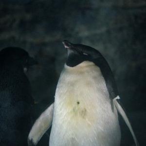 【着画】娘ドットシャツコーデ♪昨日は水族館へ。スーパーDEALが30%ポイントバックも!!