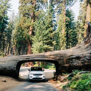 セコイア国立公園行ってきました②Crescent Meadow&Big Trees Trail