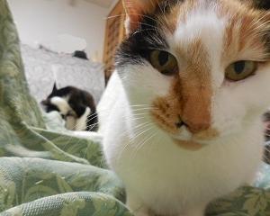 猫は窓辺で伸びをするその2。