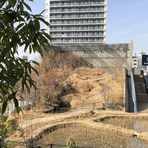 渋谷の田んぼ
