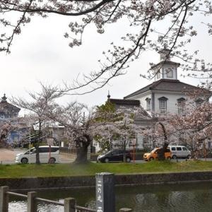 4月8日の鶴岡公園の桜