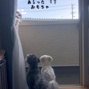 おもちゃのお洗濯☆ 初物の栗