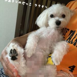 「正しい飼い方・しつけ方」  amazonより祝出版!!
