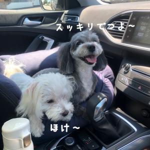 トリミング〜(๑˃̵ᴗ˂̵)