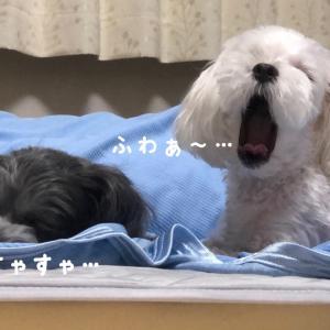 長期なお盆休み・・・