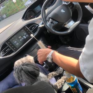 朝からドライブ〜
