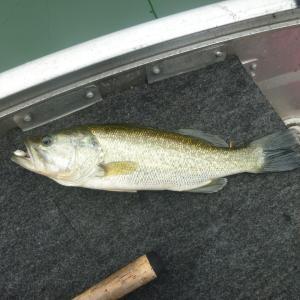2012年4月14日(土) やっと釣れたよ池原ダム2012年春の巻