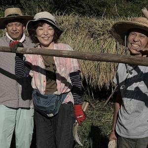2019 赤米様の稲刈り