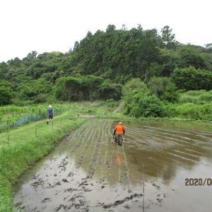 田植えは梅雨ですね~
