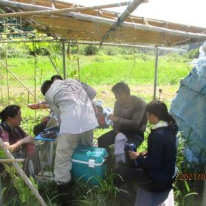 大豆の摘芯と草とりマルチ