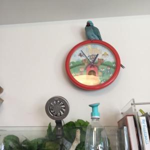 我が家のリアル鳩時計