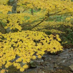 茶臼山、売木村の秋