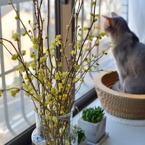 姫水木と鎌倉の桜