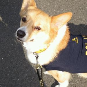 【辞令】Ballondog Police 大分犬警にレオン殿が配属されました!