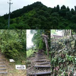 上野國 ・ 子王山城