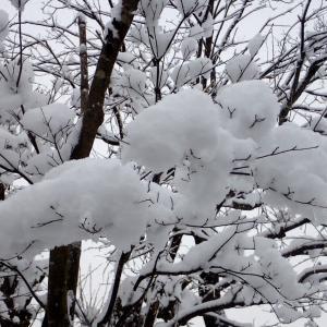 雪が降ったりやんだり