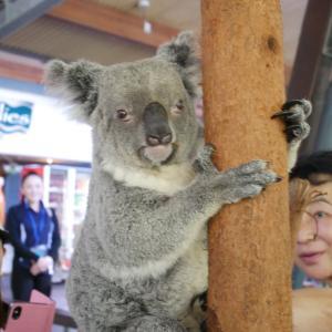 け研修旅行 ケアンズのハートリース動物園の巻