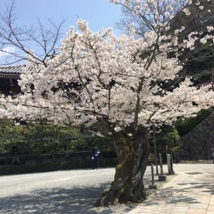 春から紫外線対策を!!!!!