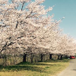 花見散歩♪