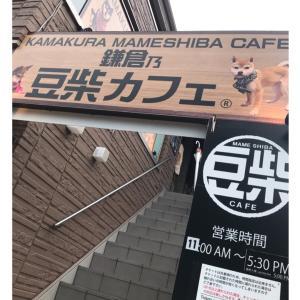 豆柴カフェとMUJIカフェ