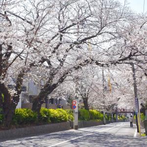 桜坂と多摩川
