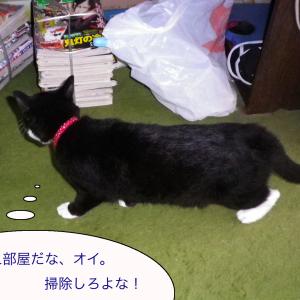 猫の写真と蕎麦とフレンチトースト