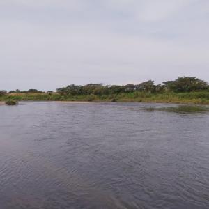 赤川のアユ事情 ウライ跡下流