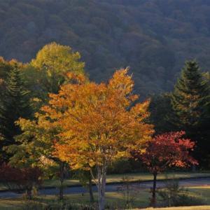 月山麓の紅葉黄葉